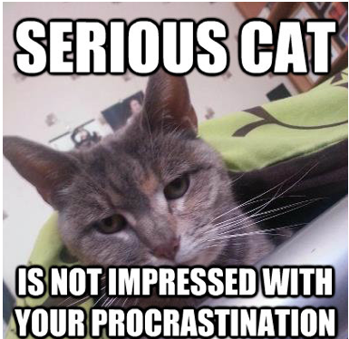 serious cat not impressed with your procrastination